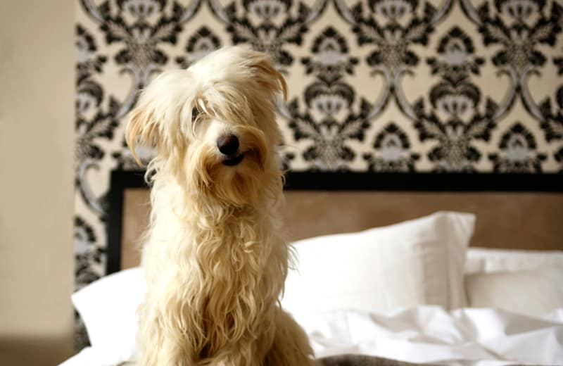 Top Dog Friendly Luxury Hotels in the United States