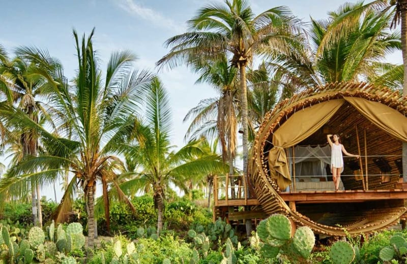 View from the Top: Luxury Tree House Hotels