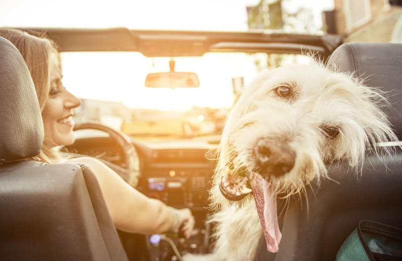 Revealed: The Ultimate Pet-Friendly Road Trip in the US