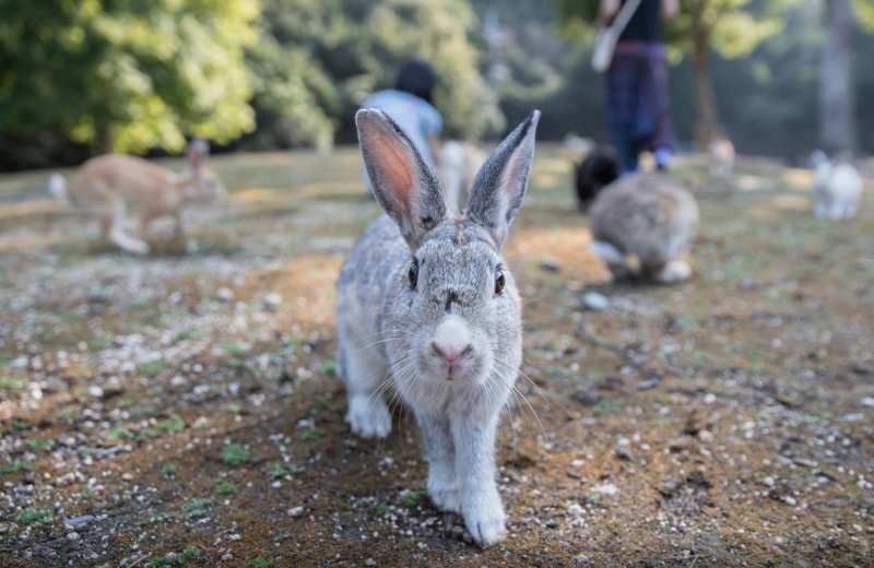 10 Ethical Destinations for Adorable Animal Lovers