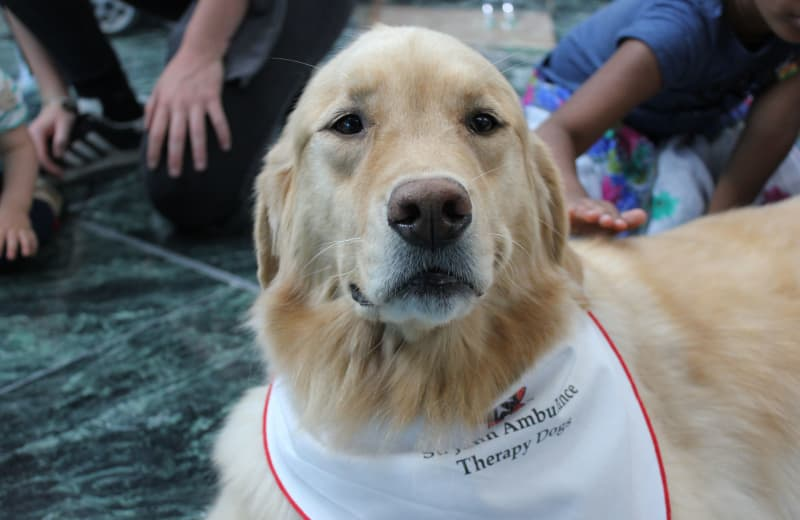 Meet YVR's Completely Adorable Airport Therapy Dogs